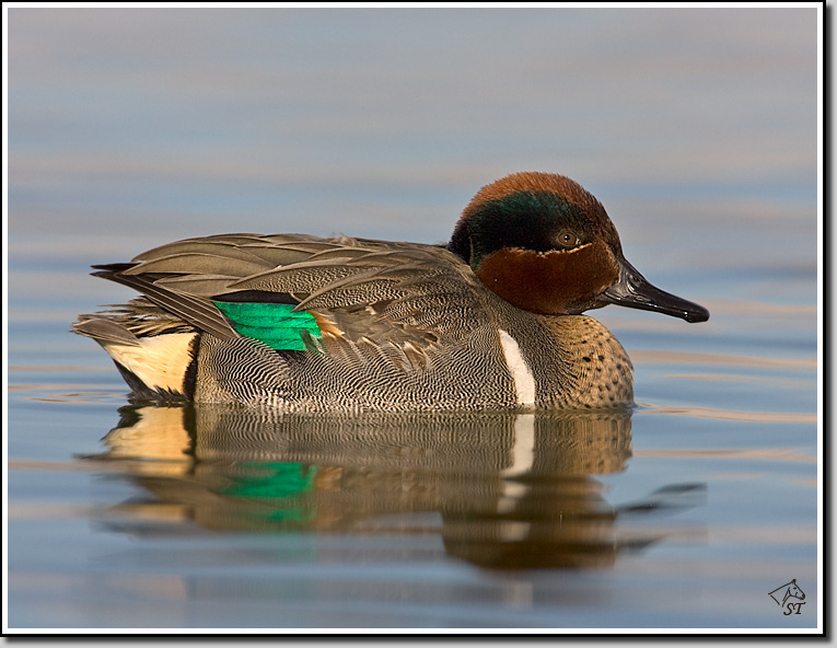 Green Teal